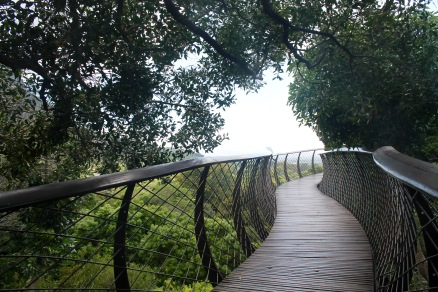 The boomslang tree-canopy walkway.